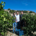 "Harvest Week: In Greece, A Grown Up's Wine, Made by ""Kids"""