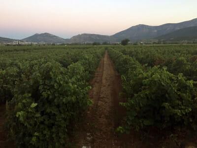 Aivalis Winery in Nemea, photo by Angelos Damoulianos