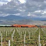 Wine Harvest 2019