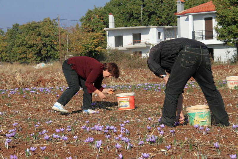 saffron Greece