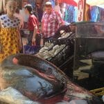A Monster Catfish In Tbilisi