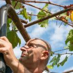 Wine Week 2020