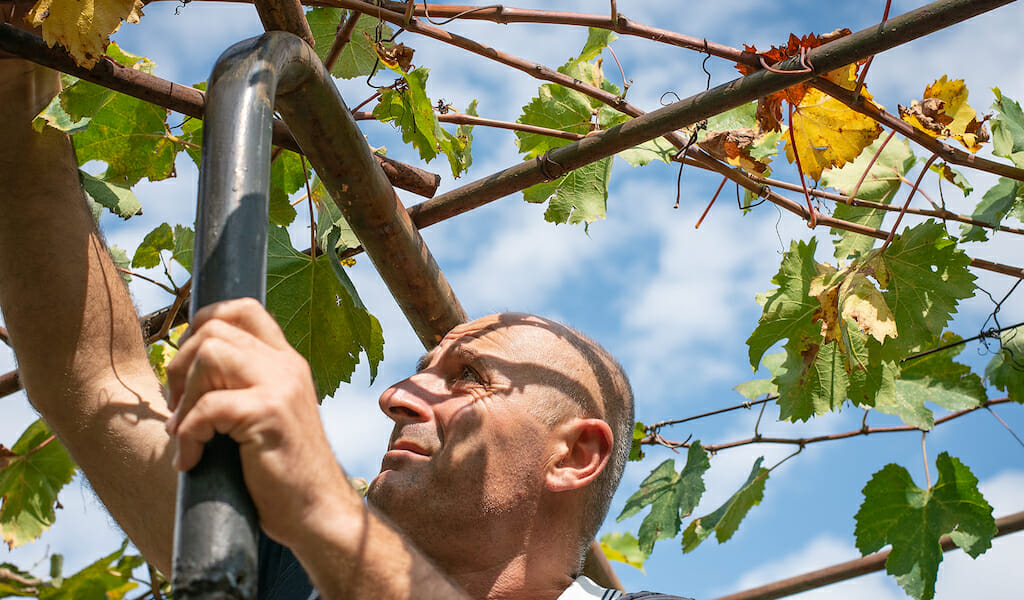 Gia Chubinidze vineyard