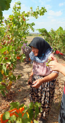 One of the grape harvesters from Hamitabat village, photo by Roxanne Darrow