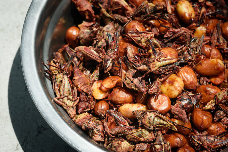 edible insects Mexico City