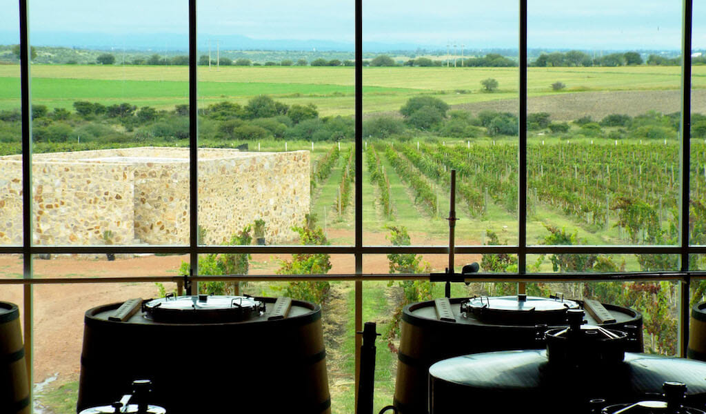 mexico winery