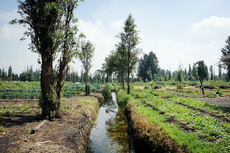 Keeping Mexico City S Agricultural Treasure Afloat In Xochimilco Culinary Backstreets